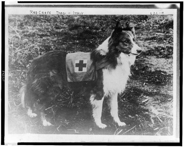 Red Cross dog - Italy