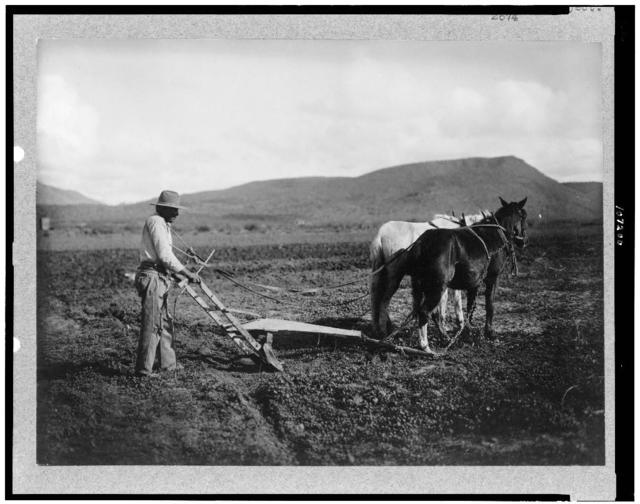 [Sacaton Indian Reservation.  Indian plowing his land.  Salt River Project]