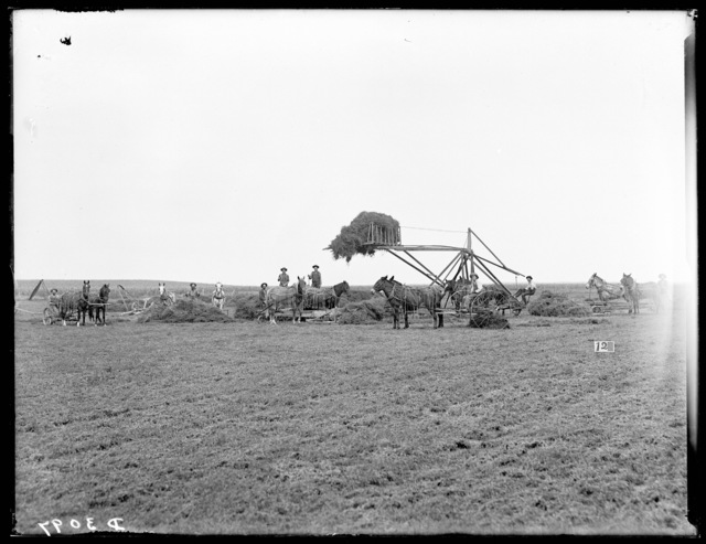 Several men putting up alfalfa at Pleasanton, Buffalo County, Nebraska.