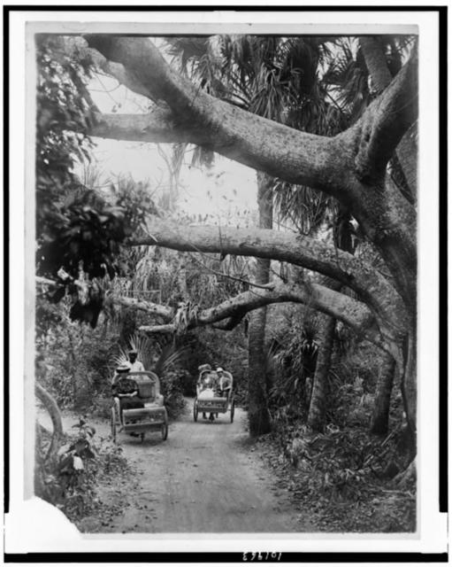 [Three people riding in two wheeled chairs pushed by two men, in wooded area, Palm Beach, Florida]