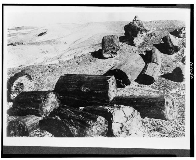 Yellowstone National Park--fossel [sic] logs in petrified state, Apache County, Arizona