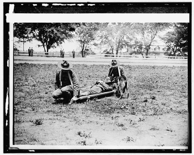 # 19 American Red [Cross] Allentown camp; Red Cross dogs & stretcher bearers