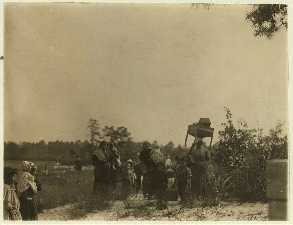 A group of cranberry pickers moving from one part of the bog to another. Whites Bog, Browns Mills, N.J. This is the fourth week of school and the people here expect to remain two weeks more. Sept. 28, 1910. Witness E.F. Brown.  Location: Browns Mills, New Jersey / Photo by Lewis W. Hine.