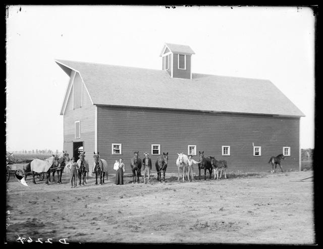 Barn and livestock of Jacob Johnson, Gibbon, Buffalo County, Nebraska.