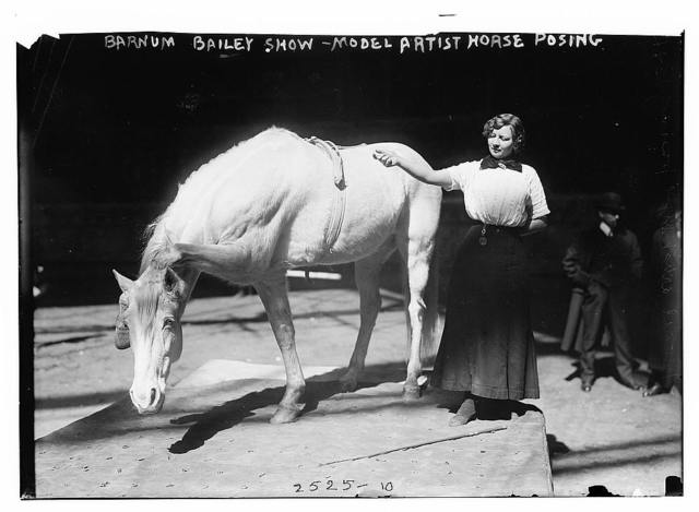 Barnum-Bailey Show - Model Artist Horse Posing