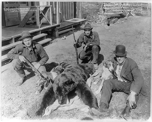 Black bear weighing 252 lbs. shot by Jim O'Brine 5/12/10 at Saltese, Mont.