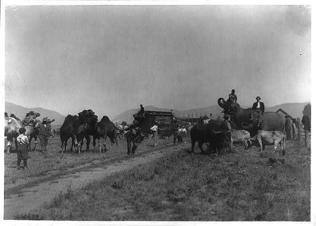 Campbell Bros. Circus at Plains, Mont.