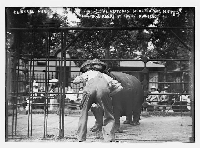 Central Park - man with head in hippo's mouth