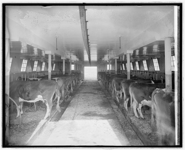 Chestnut Farms Dairy, [Washington, D.C.]