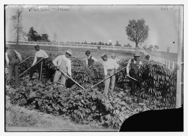 Field work, Tuskegee
