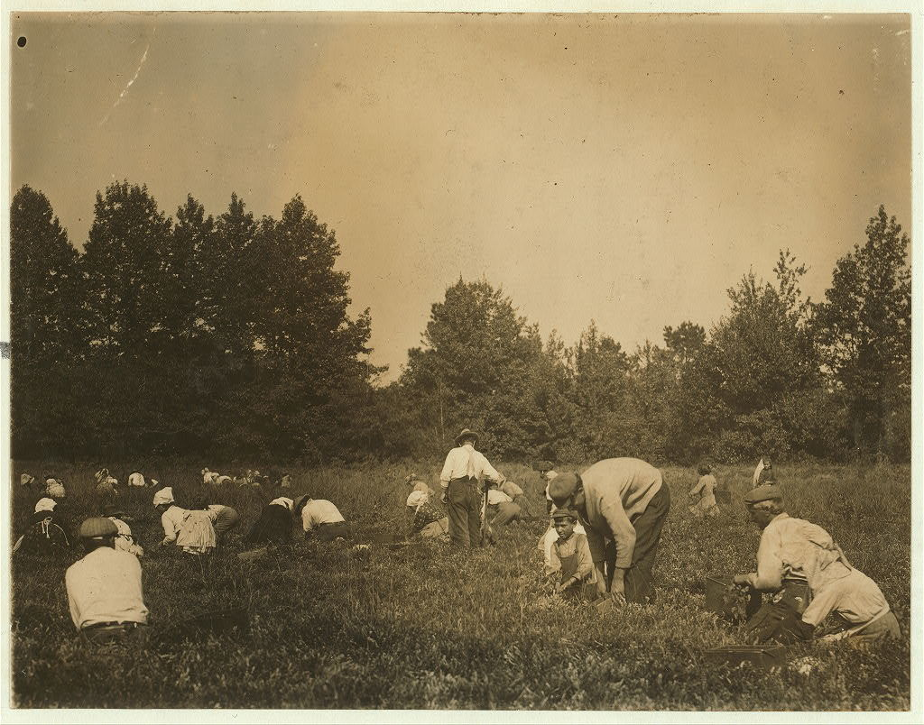 General view of Forsythe's Bog, Turkeytown, near Pemberton, N.J. with Padrone. Sept. 29, 1910. Witness, E.F. Brown.  Location: Pemberton, New Jersey / Photo by Lewis W. Hine.