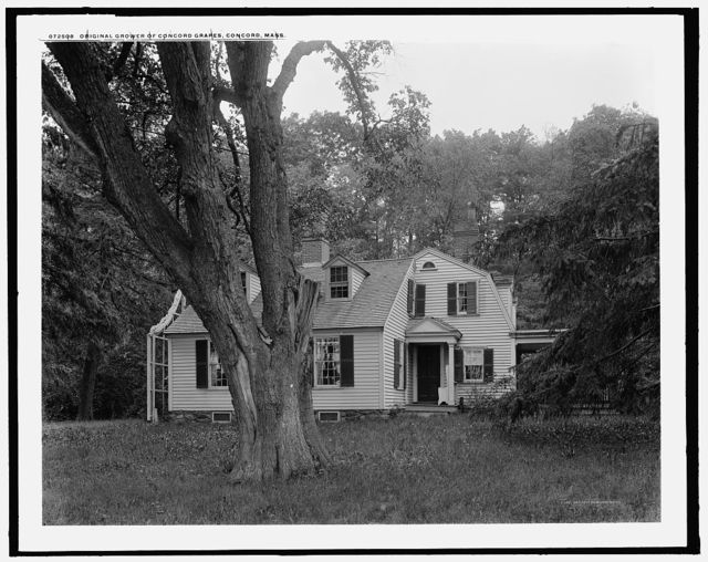 [Grapevine Cottage, home of] original grower of Concord grapes, Concord, Mass.