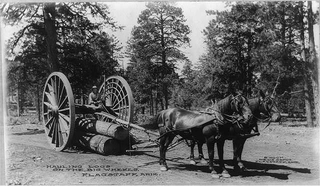 Hauling logs on the big wheels, Flagstaff, Ariz.