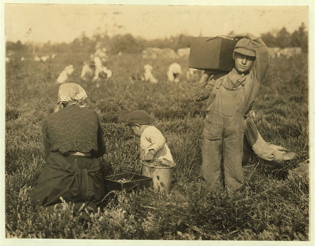 Jim Waldine, 1023 Carpenter St., Philadelphia. 6 years old, been picking cranberries two years. Also Sam Frohue, 9 years old, been picking two years, could not spell his own name. 1106 Titten St., Philadelphia. Theodore Budd's Bog at Turkeytown, near Pemberton, N.J. This is the fourth week of school in Philadelphia and people will stay here two weeks more. E.F. Brown Wit[ness].  Location: Pemberton, New Jersey.