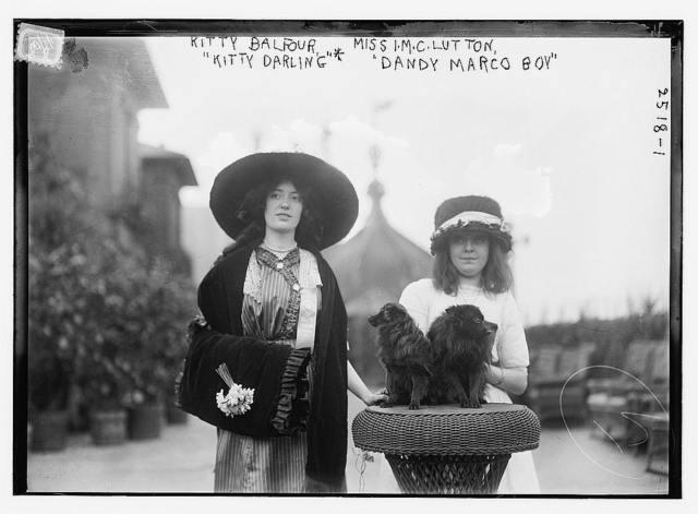 "Kitty Balfour, Miss I.M.C. Lutton, ""Kitty Darling"", ""Dandy Marco Boy"""