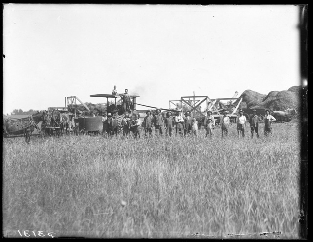 Large threshing crew on farm south of Shelton, Nebraska.