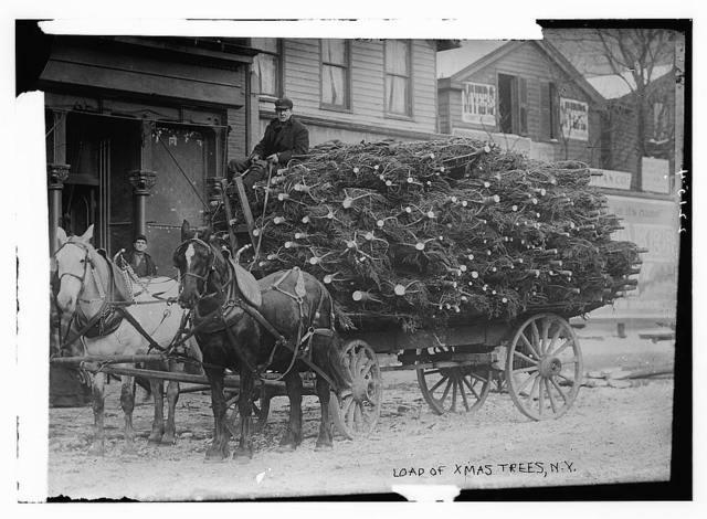 Load of Xmas trees, N.Y.