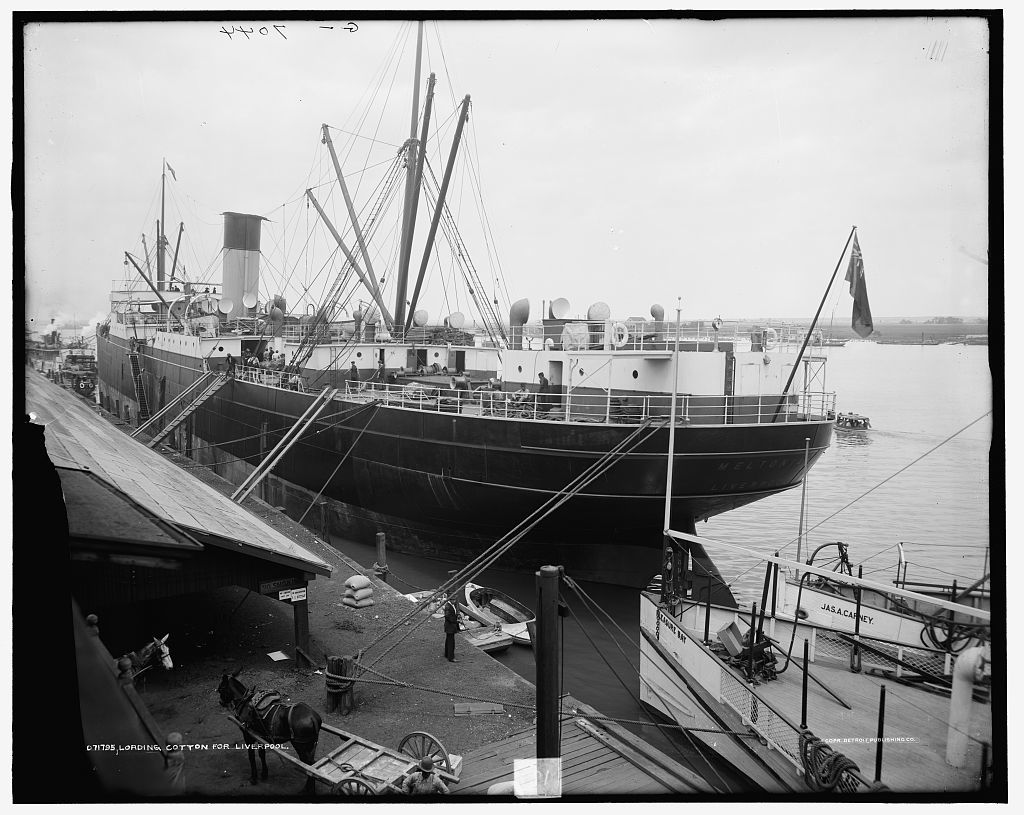 Loading cotton for Liverpool