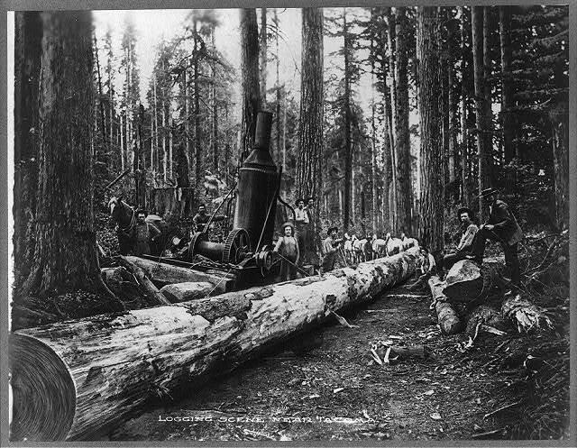 Logging scene near Tacoma
