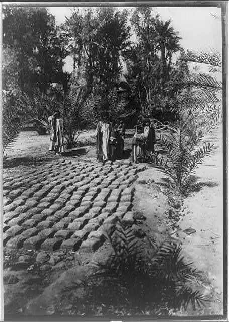 Mud blocks, used in building houses, drying in the sun in the garden at Al-Gowf, Arabia
