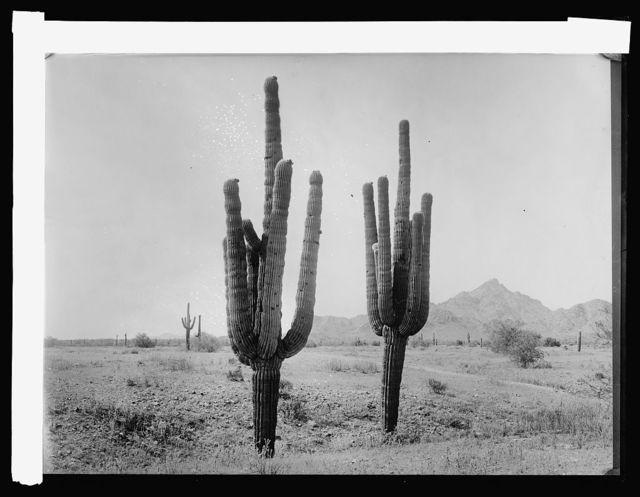 Salt River, desert before irrigation, [Arizona]