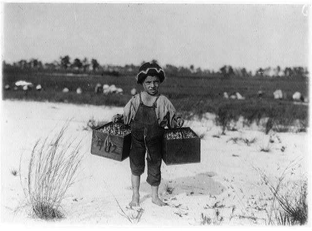 """Salvin Nocito, 5 years old, carries 2 pecks of cranberries for long distance to the """"bushel-man."""" Whites Bog, Browns Mills, N.J. Sept. 28, 1910. Witness E. F. Brown.  Location: Browns Mills, New Jersey / Photo by Lewis W. Hine."""