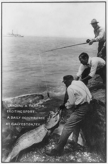"[Tex. - Galveston - ""landing a tarpon - exciting sport - a daily occurrence at Galveston""]"