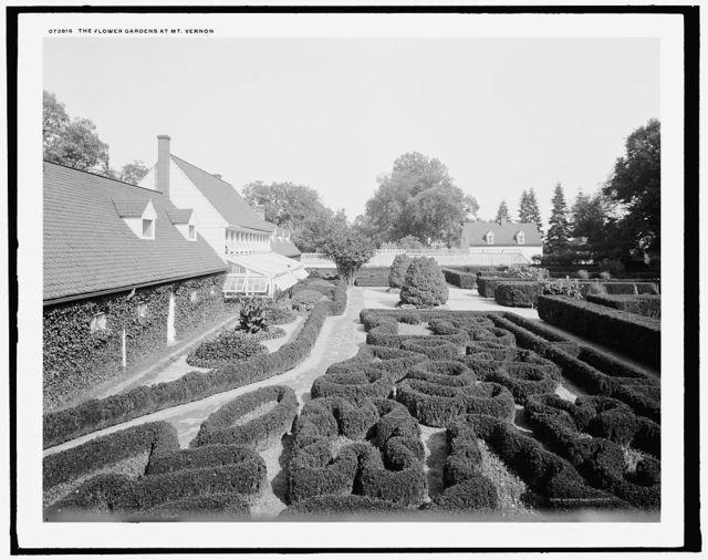 The Flower gardens at Mt. Vernon
