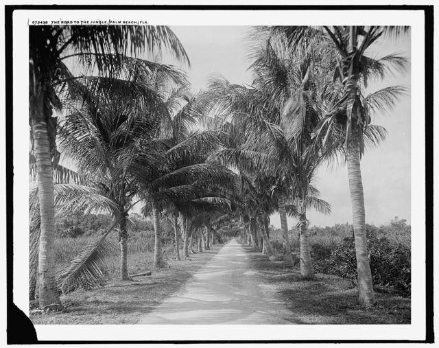 The Road to jungle trail, Palm Beach, Fla.