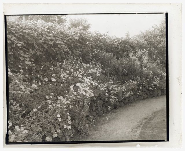 [Unidentified house and garden. Flowers along driveway]