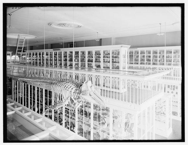 [Whale skeleton and bird exhibits, East India Marine Hall, Peabody Museum of Salem, Salem, Mass.]