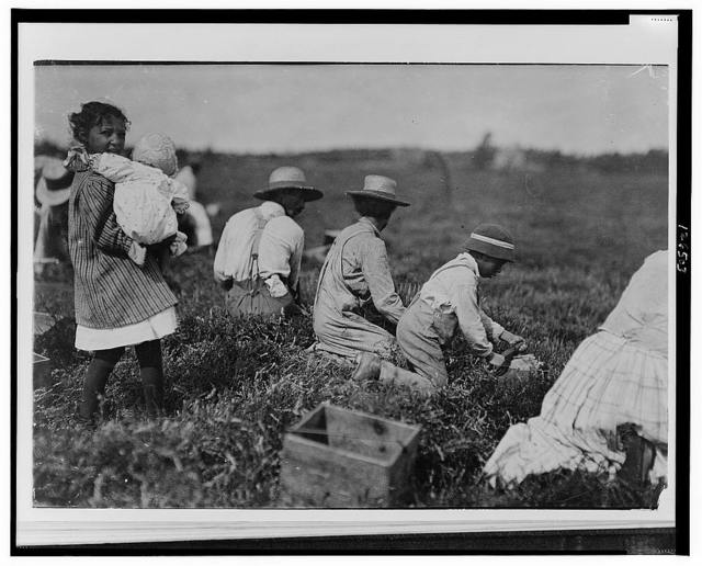 Arthur Fernande [or Fernando?] Said 8 years old. Picking cranberries by hand, and brother Charlie said he was 9 picking with a scoop. Said they worked from 9 till 5.  Location: Hollow Branch Bog, near Wareham, Massachusetts.