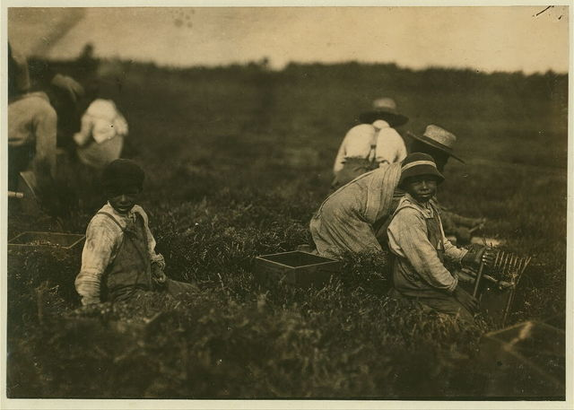 Arthur Fernande. Said 8 years old. Picking cranberries by hand, and brother Charlie said he was 9 picking with a scoop. Said they worked from 9 till 5.  Location: Hollow Branch Bog, near Wareham, Massachusetts.