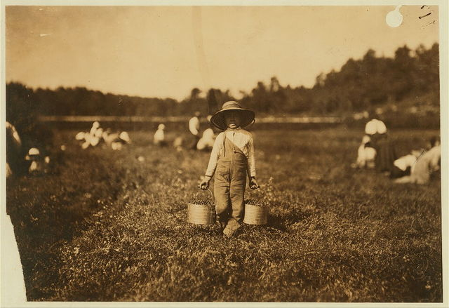Belford Coldos, 27 Cannon St., New Beford, Mass. 8 years old. Picking on Weeks' Bog.  Location: Falmouth, Massachusetts.