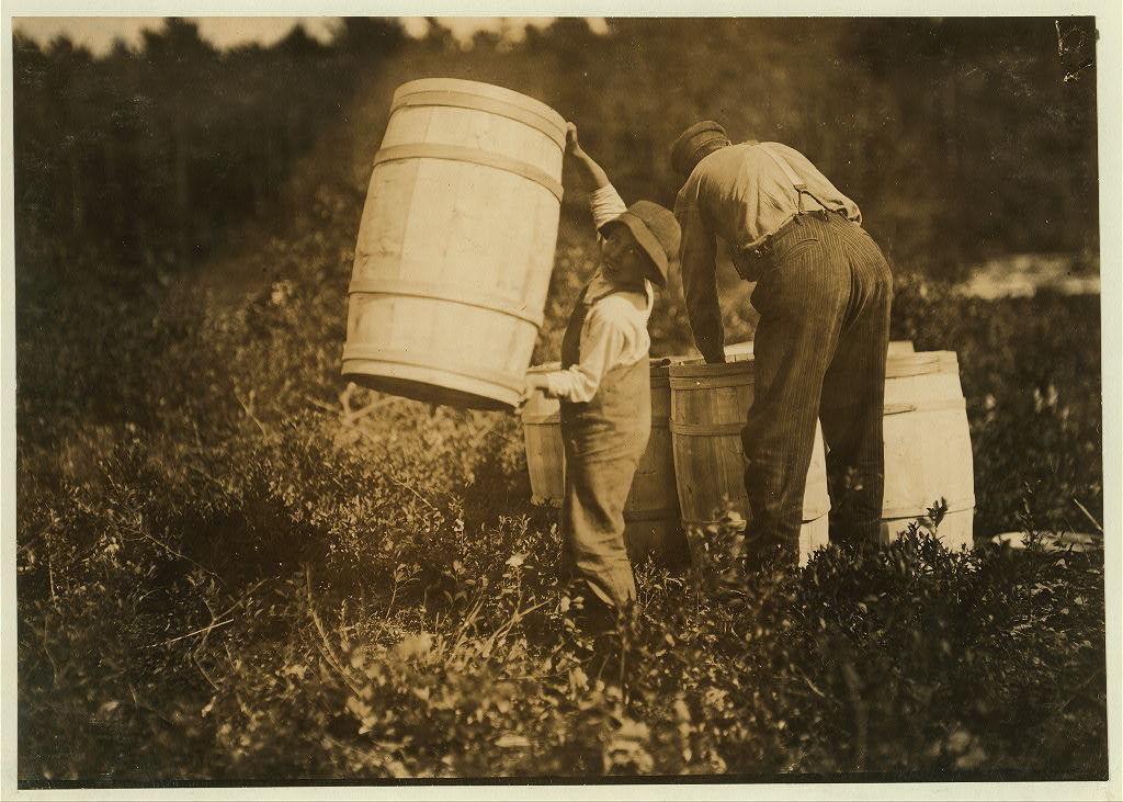 Boy who carries barrels. Robert Saunders, 10 years old. Lives Waquoit - is the sone [i.e., son] of the boss. Mother picks too.  Location: South Carver [vicinity], Massachusetts.