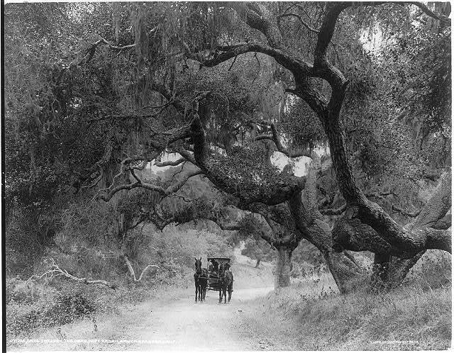 Drive through the oaks, Hope Ranch, Santa Barbara, Calif.