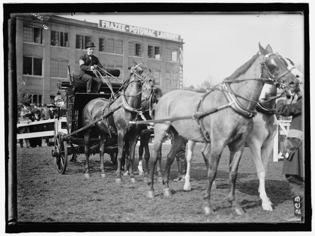 HORSE SHOWS. ADOLPHUS BUSCH, 3RD OF ST. LOUIS