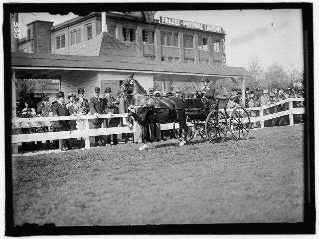 HORSE SHOWS. UNIDENTIFIED MAN DRIVING. GEN. ALLEN AND SECRETARY DICKINSON STANDING BACK OF FENCE NEAR HEAD OF HORSE