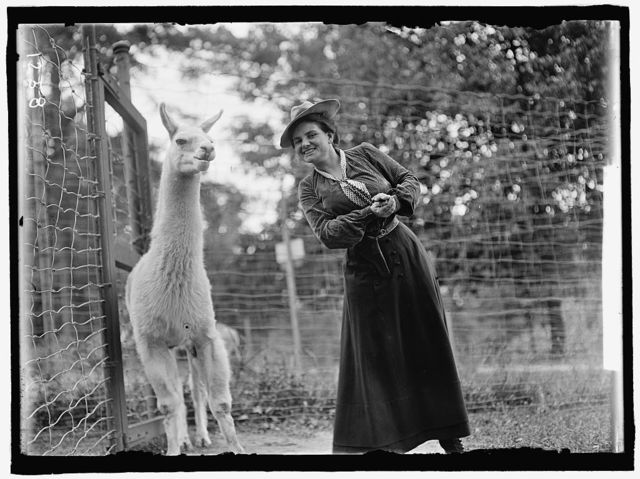 ADAMS, MRS. FRANKLIN, NEE HARRIET CHALMERS. AT ZOO WITH LLAMA