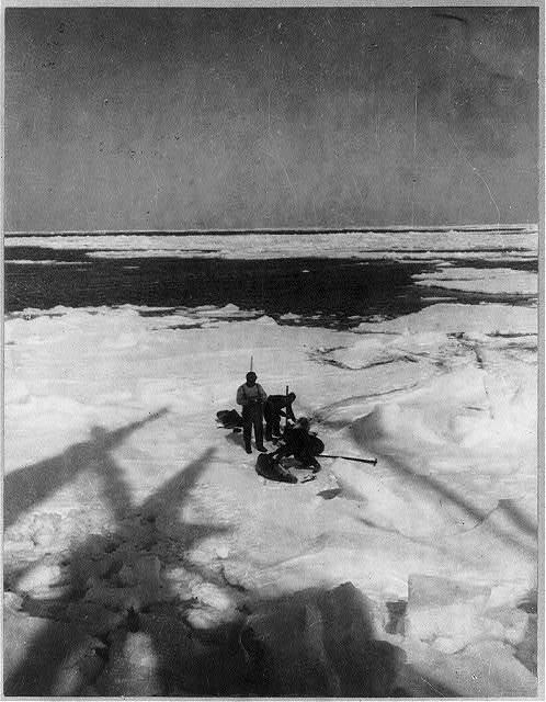 [Discovery and explorations of the South Pole by Capt. Roald Amundsen and crew, 1910-11]: Members of the expedition capturing seals