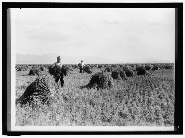 MINIDOKA PROJECT. U.S. RECLAMATION BUREAU. MINIDOKA DESERT ON YEAR AFTER IRRIGATION BY GOVERNMENT