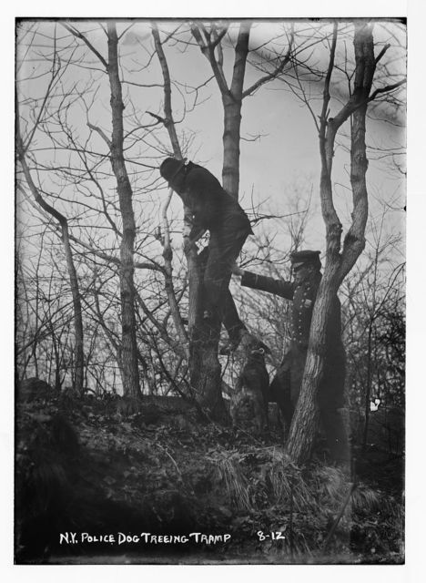 Policeman, police dog treeing tramp, New York City