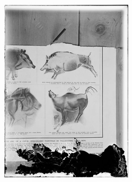 [Reproductions of cave paintings in the Altamira Cave, Spain, from the Illustrated London News, Aug. 17, 1912]