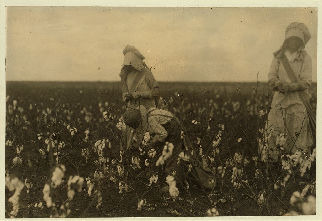 Eddie Marek a six year old cotton picker who picks fifty pounds a day. His sister thirteen years old picks one hundred pounds. Father and mother and some negroes also pick. A frugal Bohemian family. Own the farm of two hundred acres.  Location: Houston [vicinity], Texas.