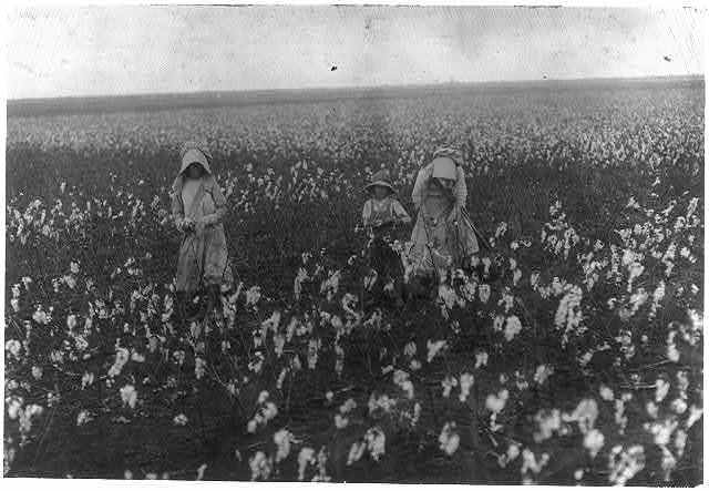 Eddie Marek a six year old cotton picker who picks fifty pounds a day. His sister eighteen years old picks one hundred pounds. Father and mother and some negroes also pick. A frugal Bohemian family. Own the farm of two hundred acres near Houston.  Location: Houston [vicinity], Texas.