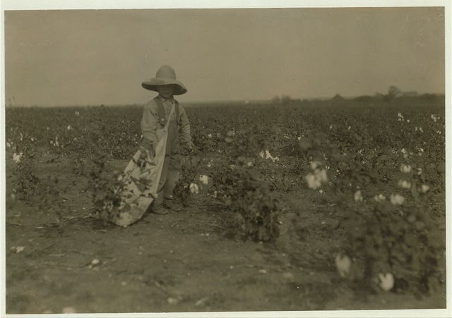 Five year old Willie Hesse. Picks fifteen pounds of cotton a day. Parents own the farm of eighty acres. Near West. Will get ten bales of cotton besides other things. Father and mother and some hired hands work. Farm well kept up.  Location: West, Texas.