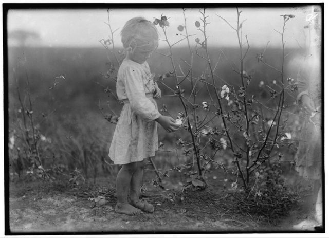 Millie. Four year old cotton picker on farm near Houston. Picks about eight pounds a day, regularly. See #3598.  Location: Houston [vicinity], Texas.
