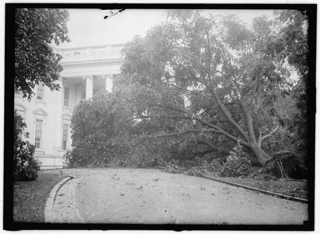 STORM DAMAGE. FALLEN TREE ON WHITE HOUSE NORTH DRIVE
