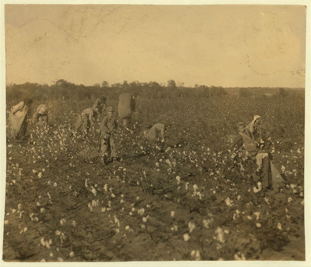 "The cotton pickers on this farm were temporary neighbors to the owner. Four adults and seven children. The latter as follows: one six year old boy picks one hundred pounds a day. His father said ""He picks one hundred pounds every day."" Two children of seven pick one hundred and fifty pounds a day each. One of nine years picks about two hundred pounds. Several from ten to fifteen pick three to four hundred pounds. The whole group picks a bale a day.  Location: McKinney [vicinity], Texas."