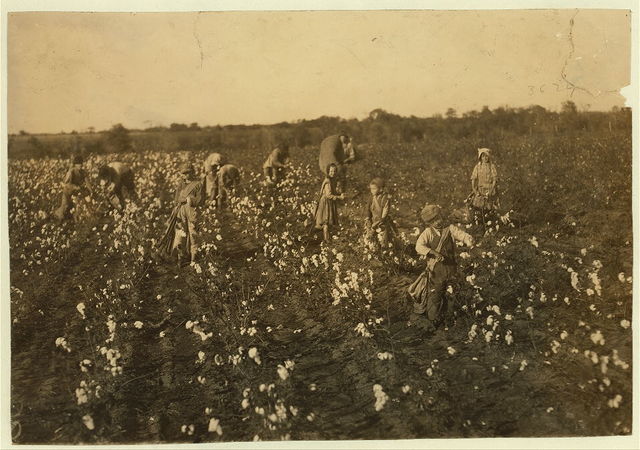 "The cotton pickers on this farm were temporary neighbors to the owner. Four adults and seven children. The latter as follows: one six year old boy picks one hundred pounds a day. His father said ""He picks one hundred pounds every day."" Two children of seven pick one hundred and fifty pounds a day each. One of nine years picks about two hundred pounds. Several from ten to fifteen pick three to four hundred pounds. The whole group picks a bale a day. (1,600 to 1,800) pounds a day.  Location: McKinney [vicinity], Texas."